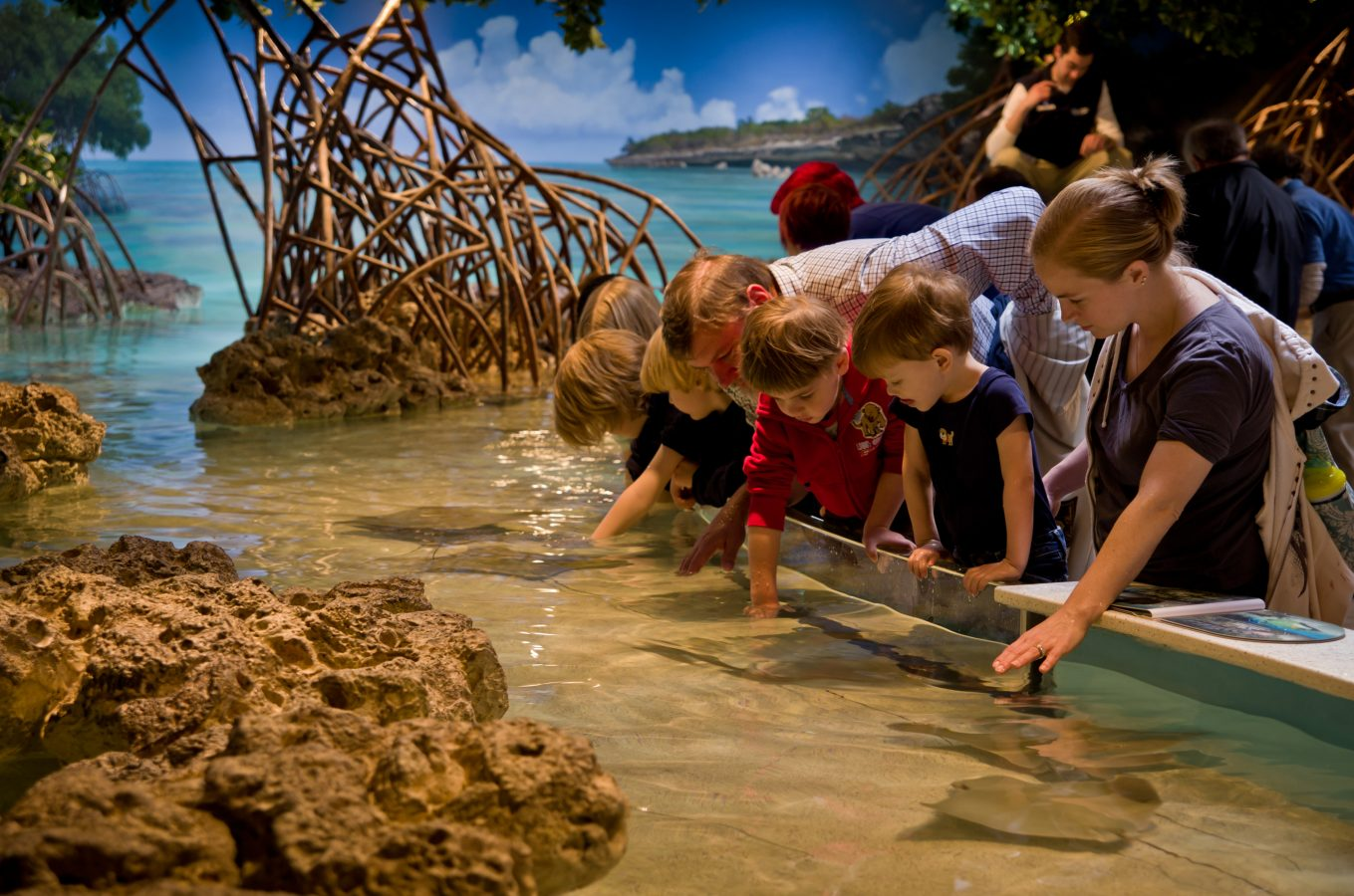 Shark and Ray Touch Tank