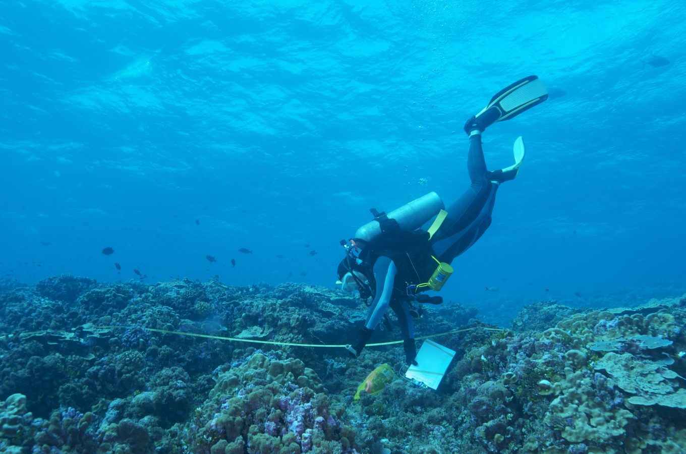 Phoenix Island Expedition Diver