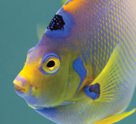Close-up of yellow and purple fish