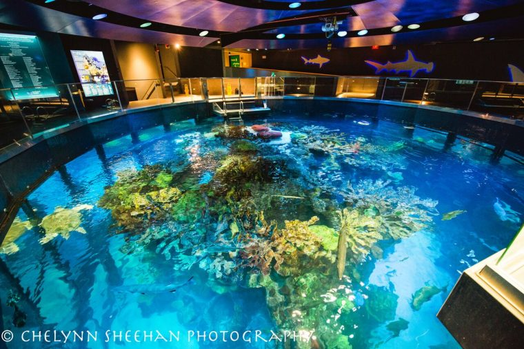 top of giant ocean tank