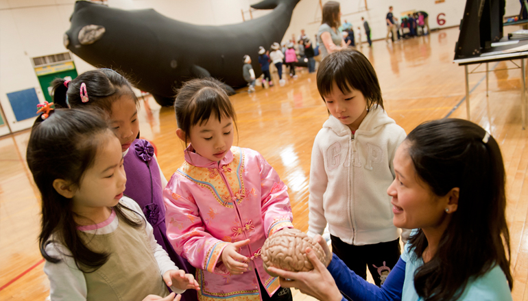 kids observe the brain of animal at school event