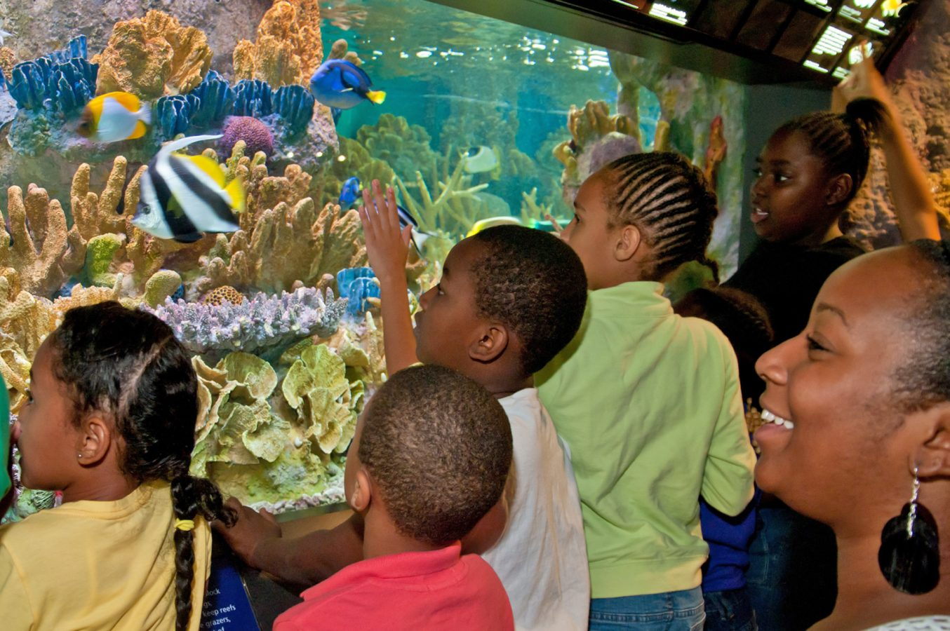 Group of kids looking at tropical fish