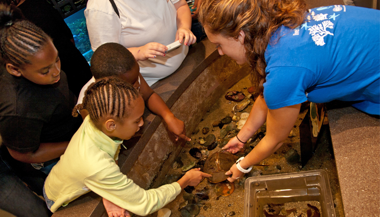 Volunteer with children at the tidepool