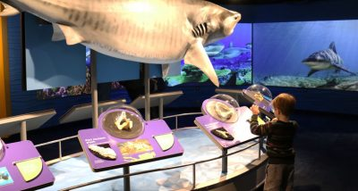 a child explores Science of Sharks exhibit