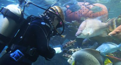 a diver swims with fish in GOT