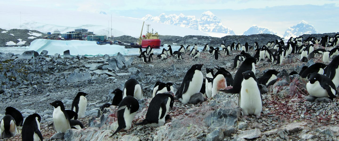 penguins in antarctica lecture series