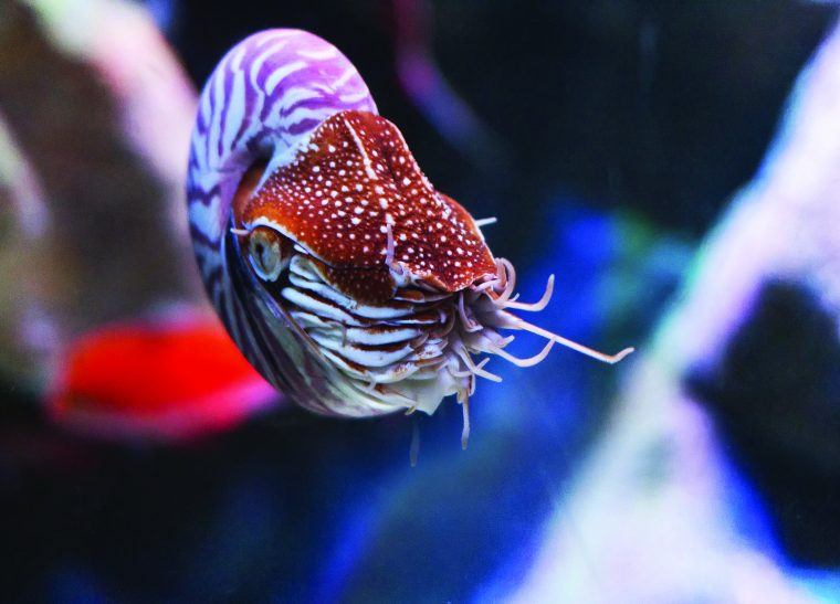front view of a nautilus