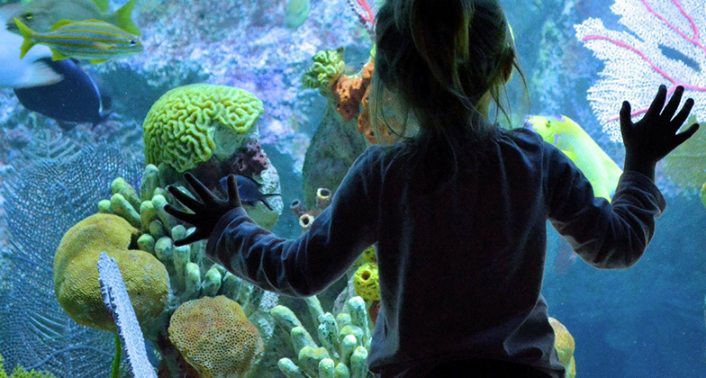 girl at window of giant ocean tank