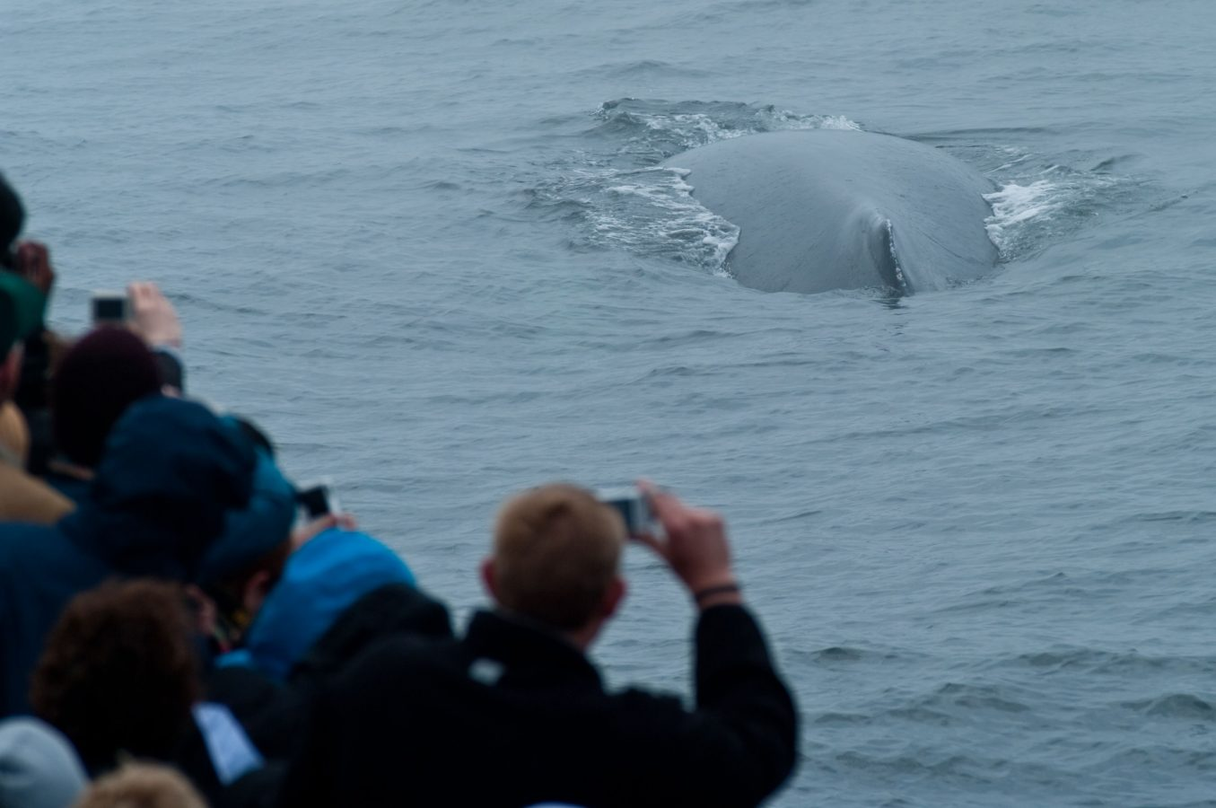 guest photograph surfacing whale