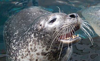 seal smiles for camera