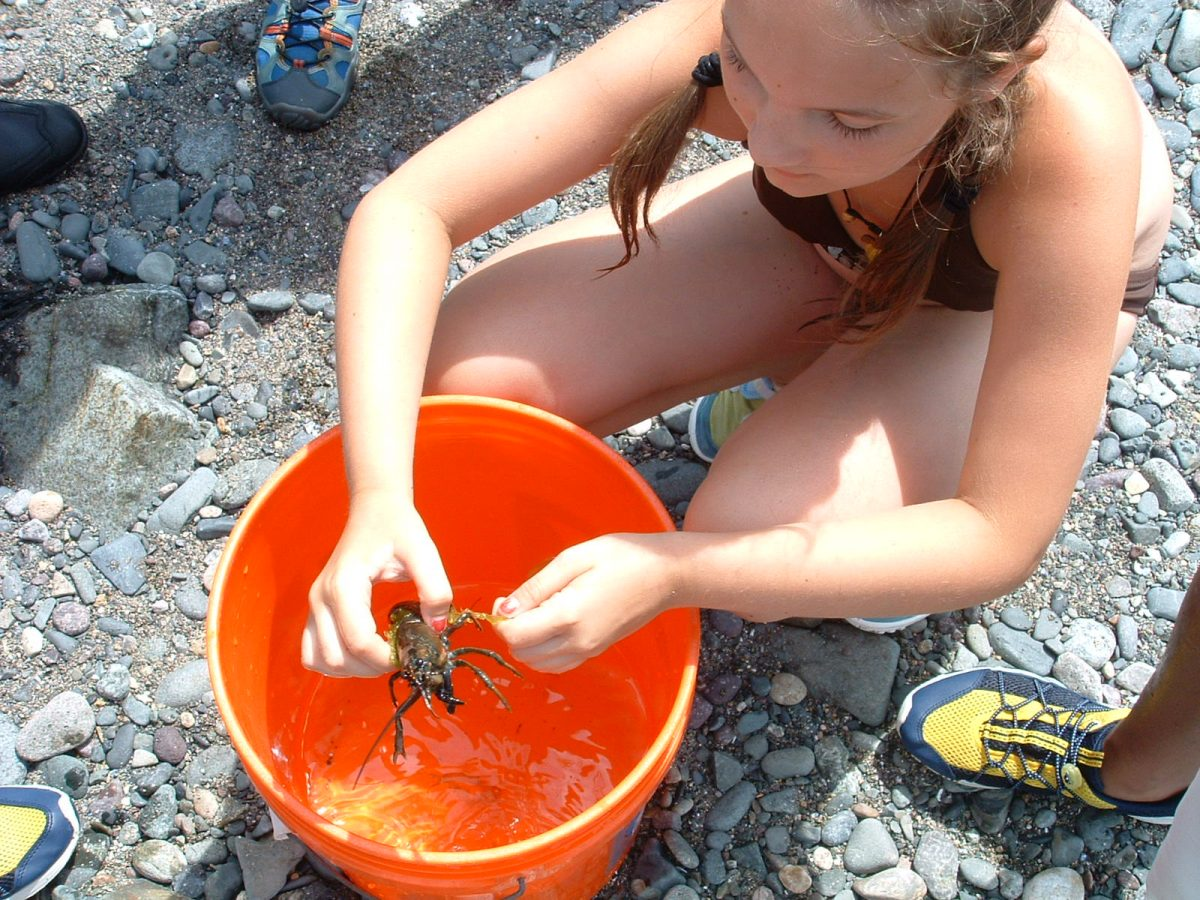 girl studies species in bucket