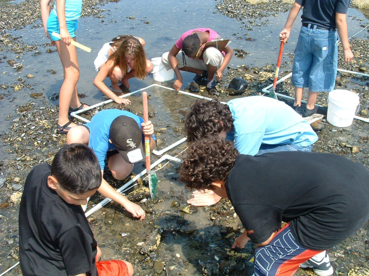 kids examine rocks in shallow water