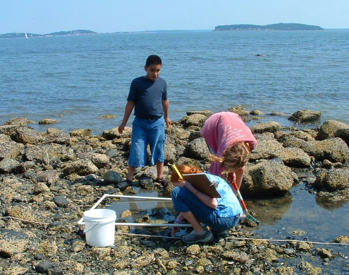 kids on rocky shore examine tidepools