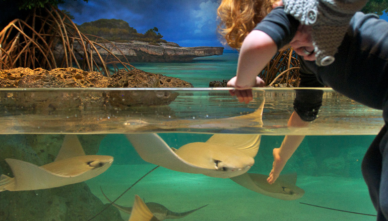 boy touching ray in the shark and ray touch tank exhibit