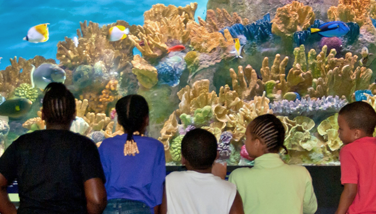 Kids looking into a tropical gallery tank