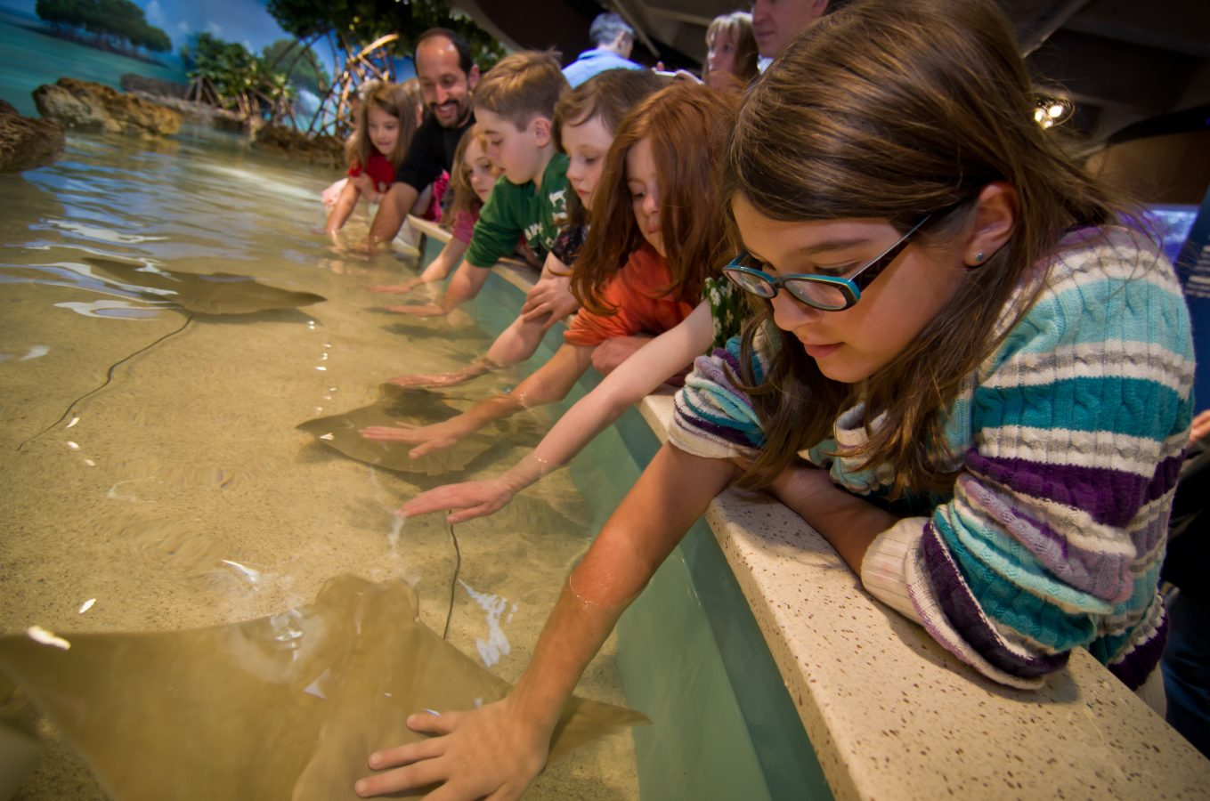 Kids touching rays in the touch tank exhibit