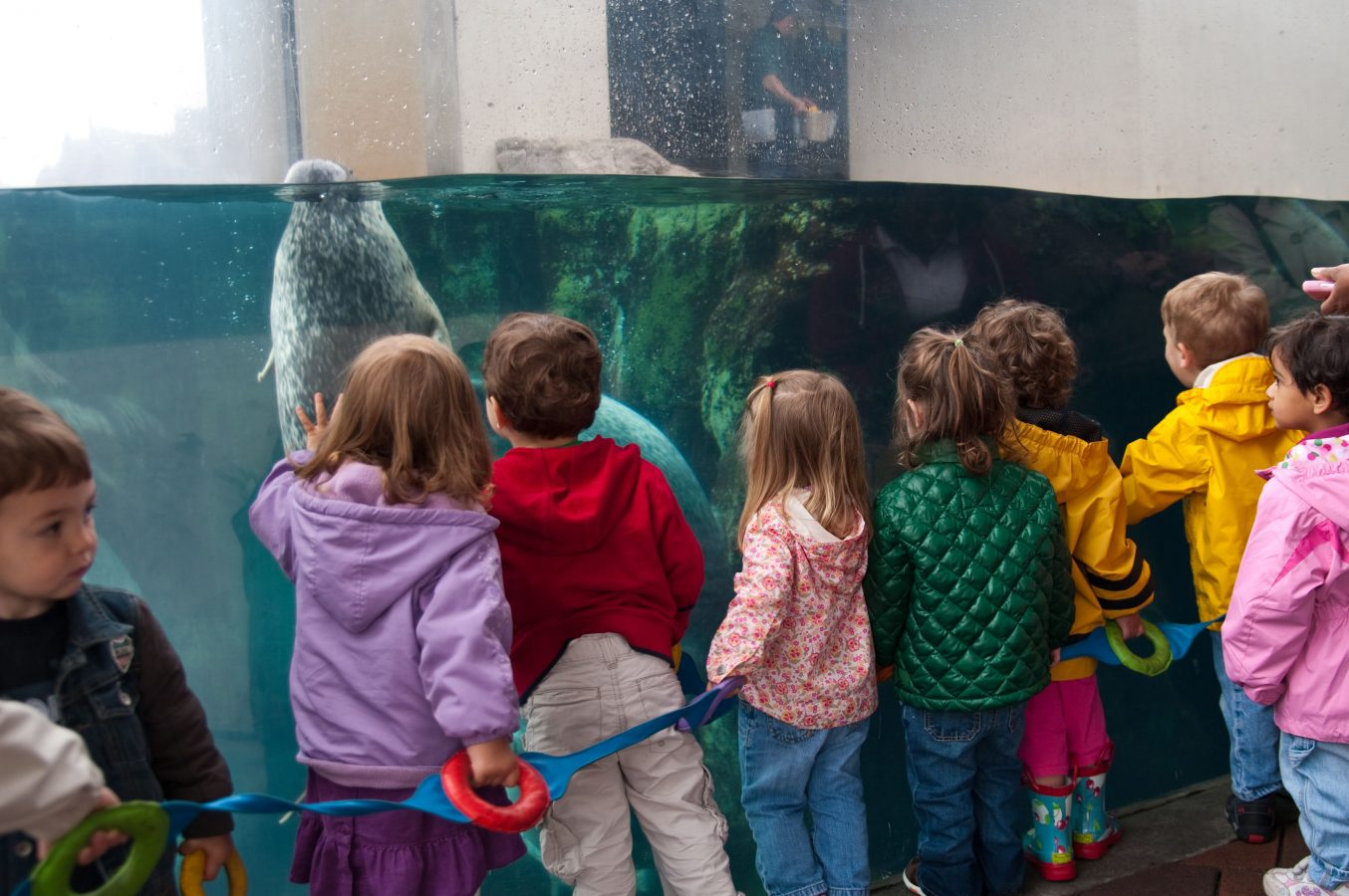 group of kids watch harbor seals