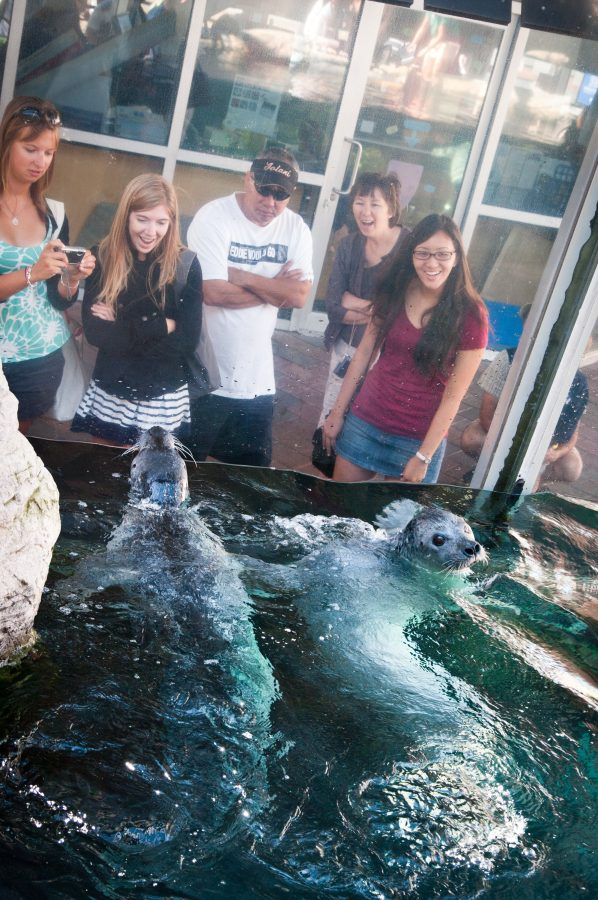 guest enjoying the harbor seals exhibit