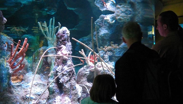 People looking at the sea dragon exhibit