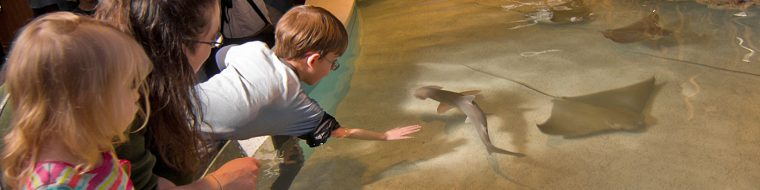 Child reaching into touch tank