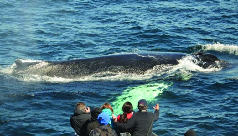 passengers watch whale surface on whale watch