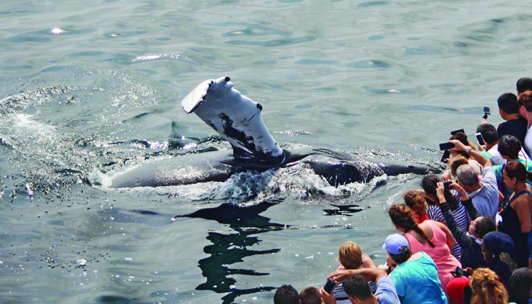 Whale waves flipper at passengers on whale watch