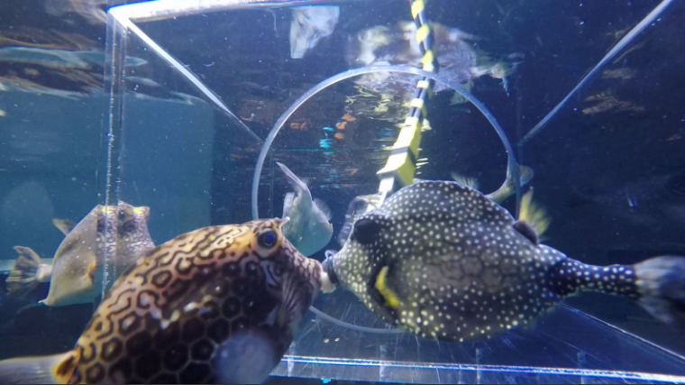 two fish eating in tank