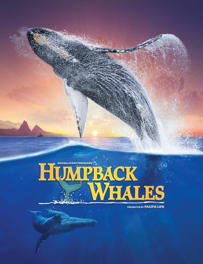 Humpback whales 3D cover
