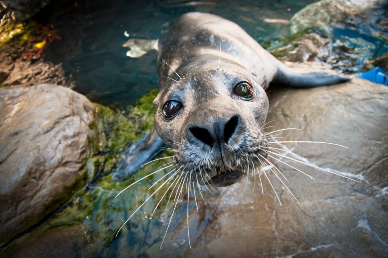 seal pops out of water to examine camera