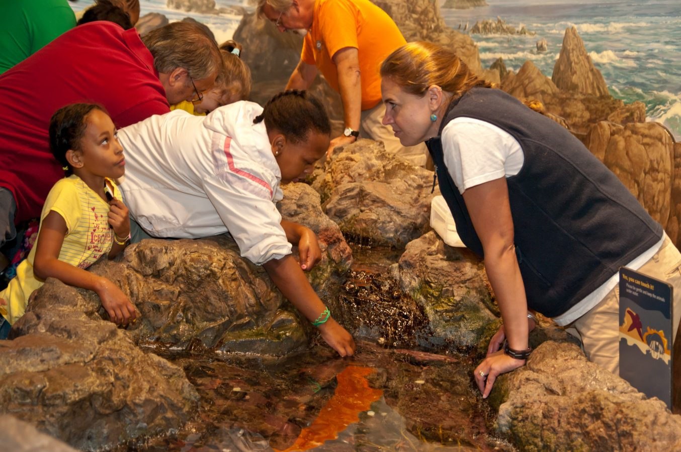 worker teaches guest about sea stars