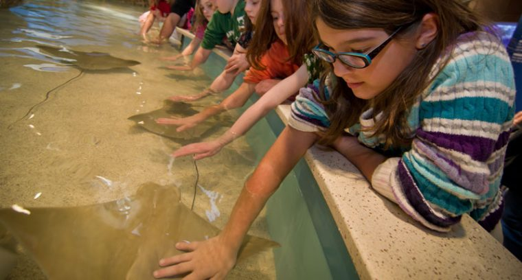 visitors with hands in the shark and ray touch tank