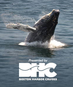 Boston Harbor Cruises cover