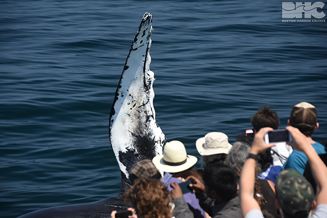 whale watch passengers look at flipper