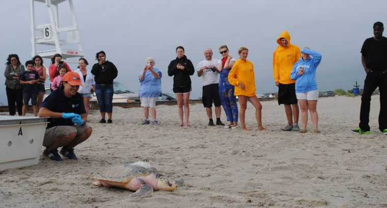 Rescuers and beachgoers watch turtle on sand