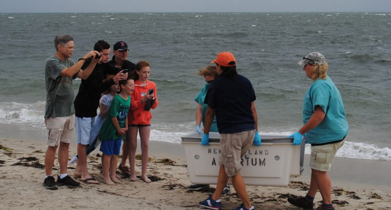 rescuers show beachgoers the turtle up close