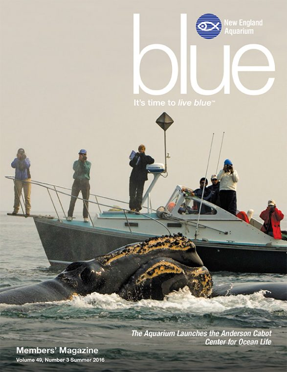 Blue_Summer2016_Cover