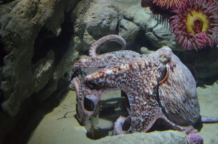 an octopus gripping a puzzle box