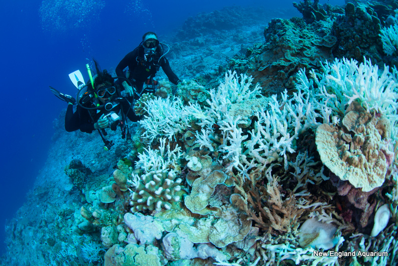 divers swim over bleached corals