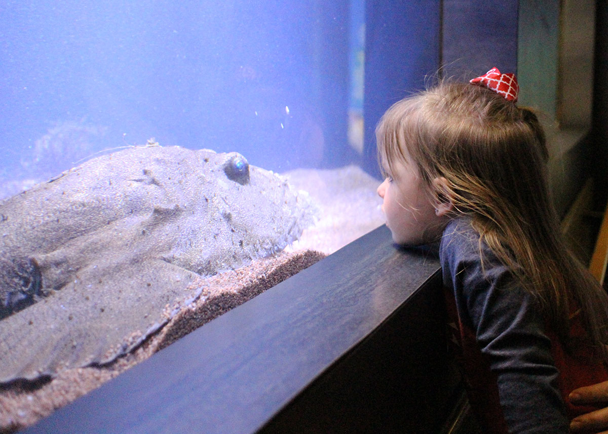 young girl looks at goosefish