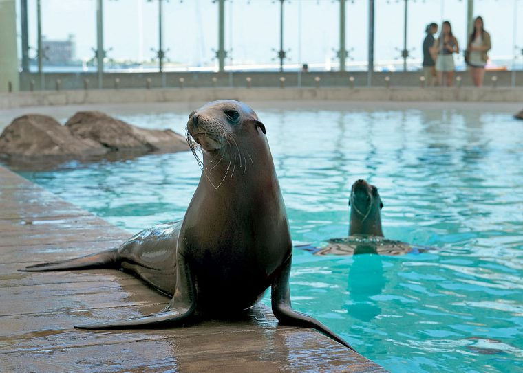 sea lion on deck with another swimming behind