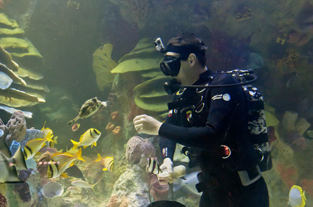diver underwater feeding fish
