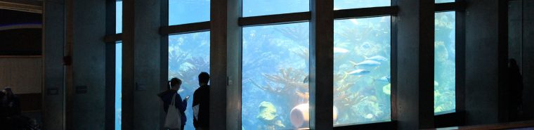 visitors silhouetted against the Giant Ocean Tank