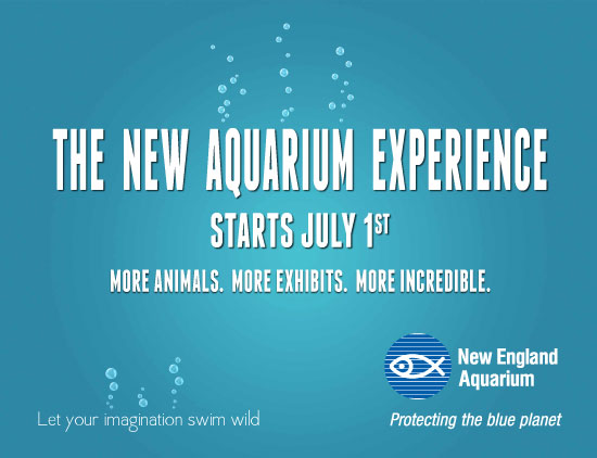 The New Aquarium Experience