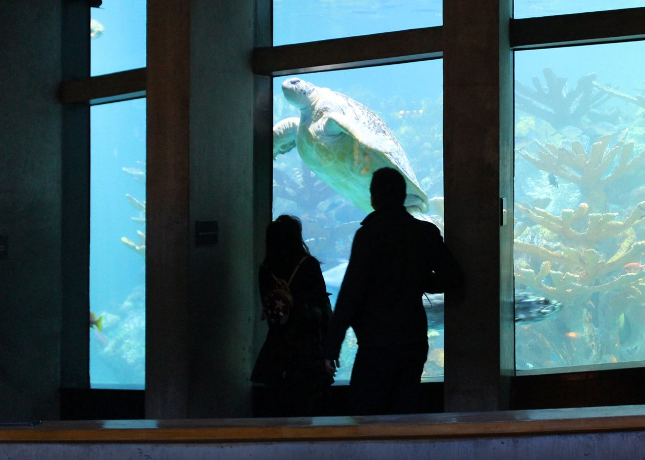 couple silhouted against giant ocean tank