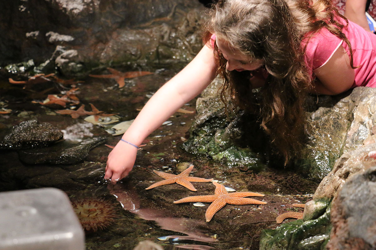 girl leans over tidepool to touch sea star