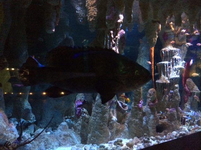 grouper exhibit