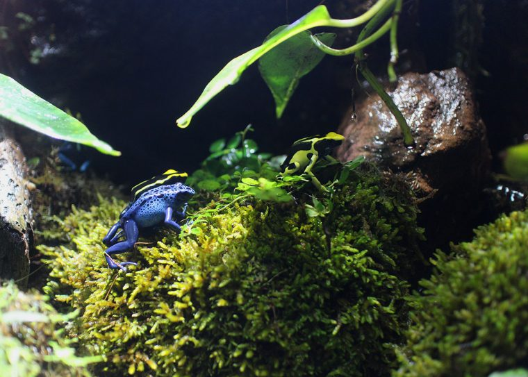various poison dart frogs