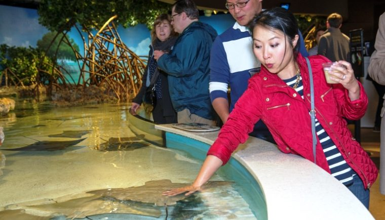 young woman holds cocktail and touches stingray