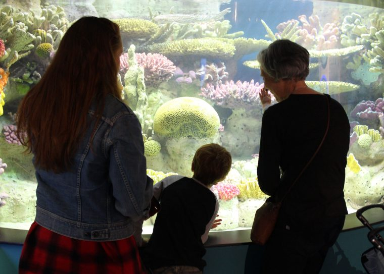 family looks at sharks in the adult shark tank