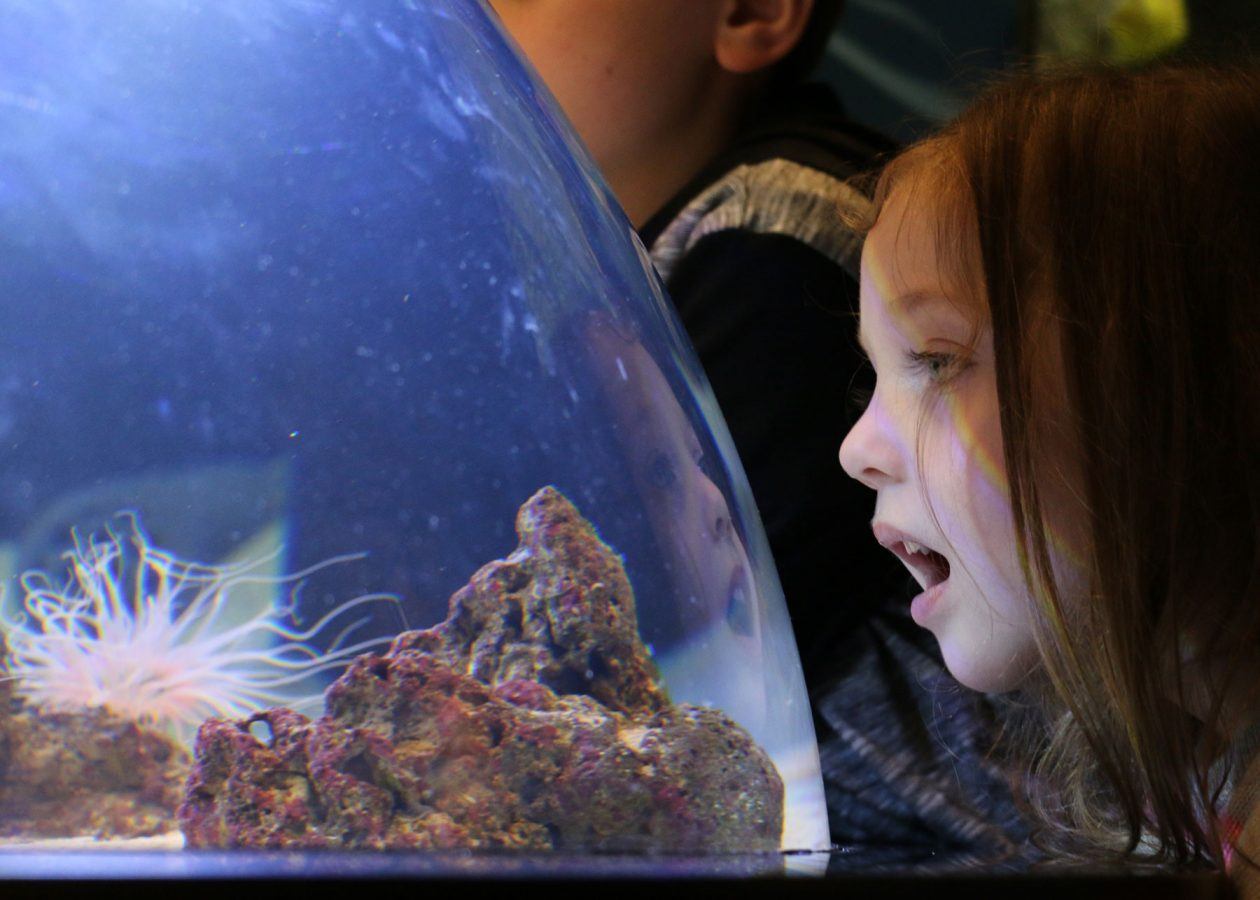 a young girl admires baby sharks